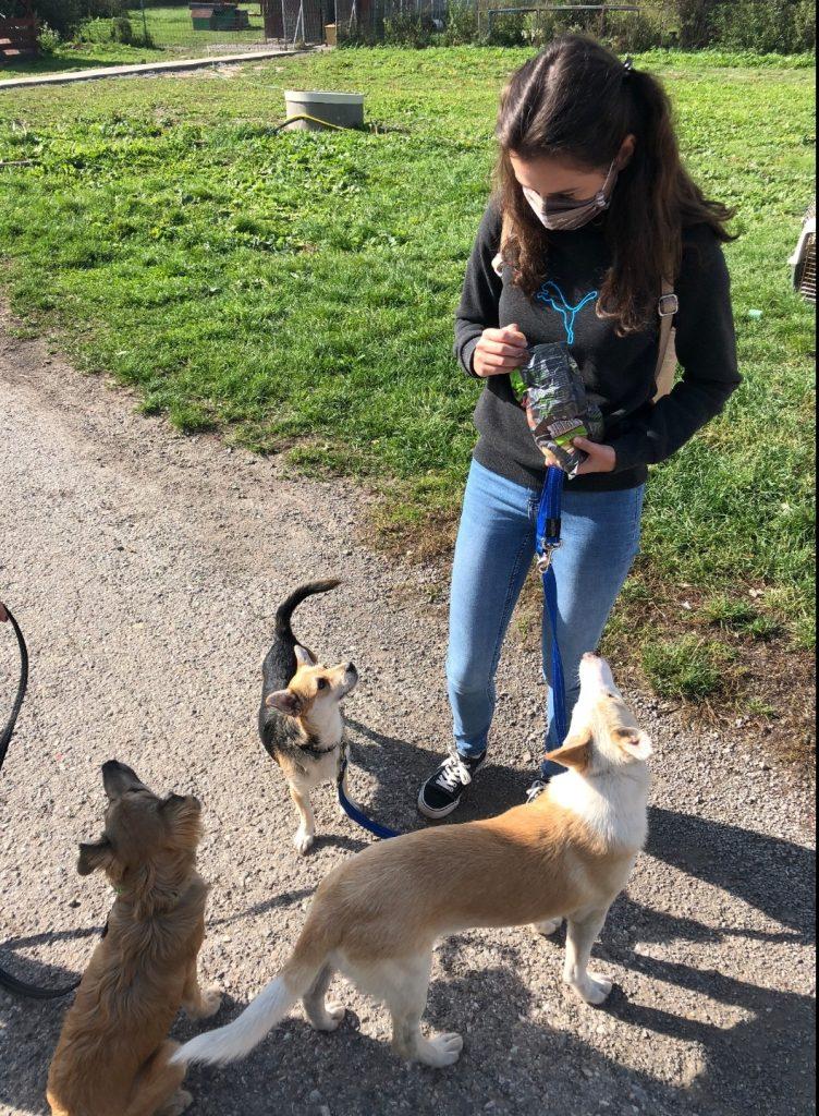 utulok UVP pre psíkov