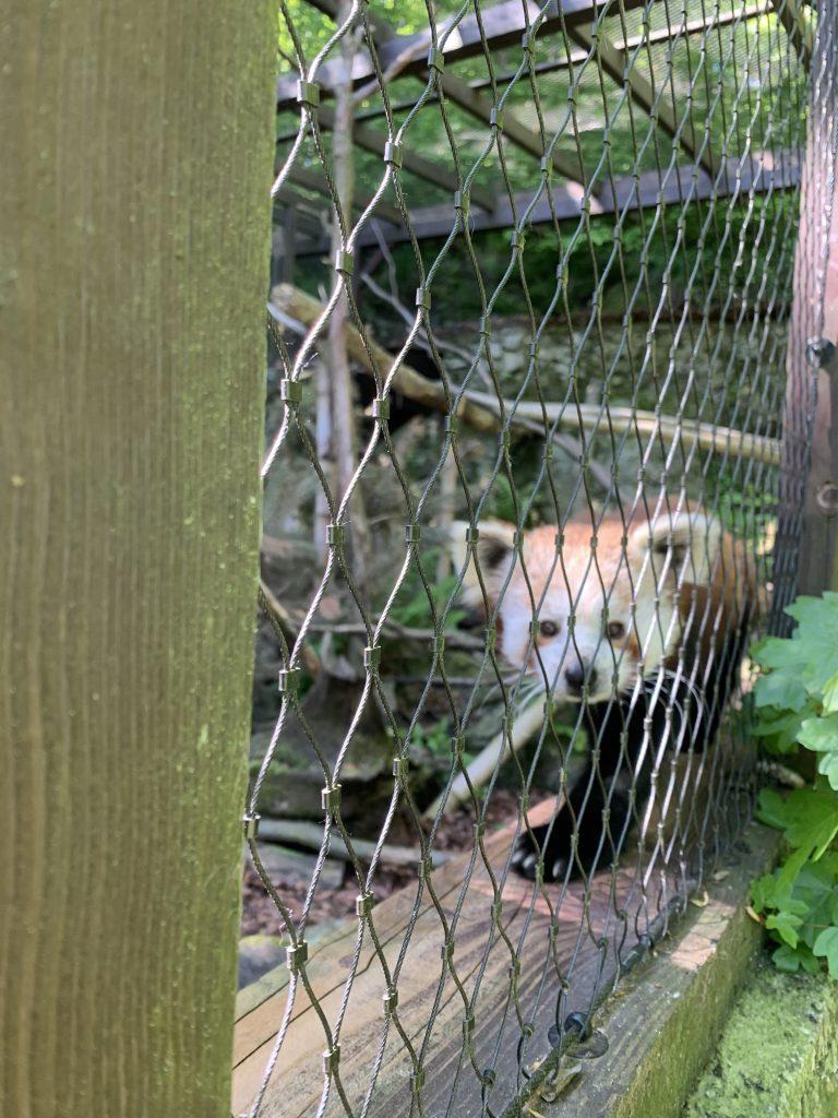 zoo kosice